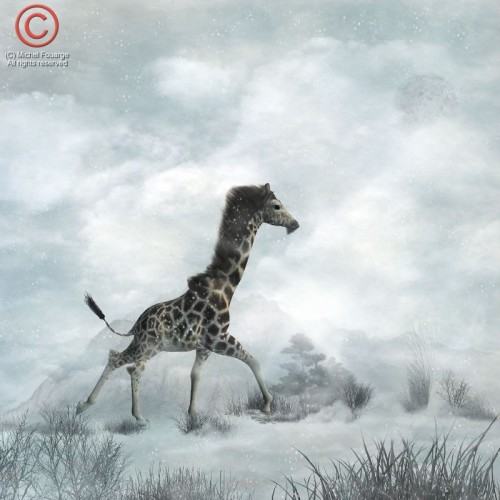 wintergiraffemerged70